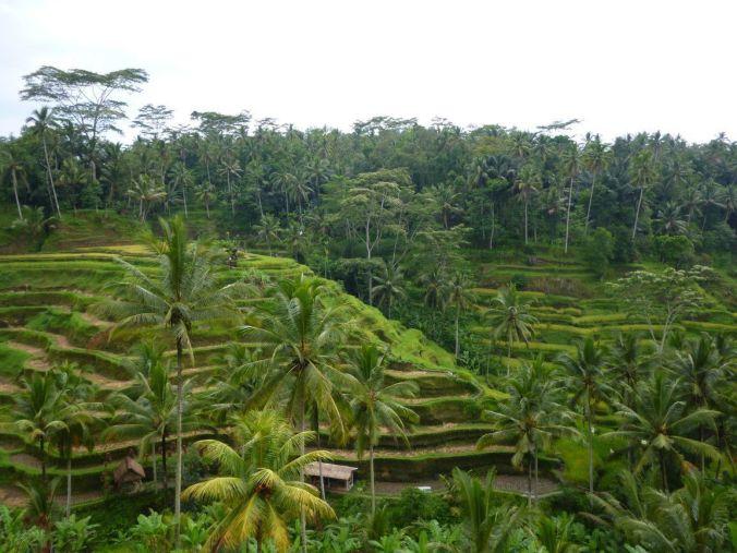 bali_indonesia_elviajenotermina_blog de viajes