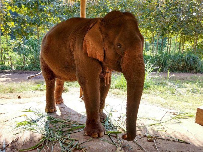 Green Hill Elephant Camp Kalaw - Myanmar - Blog Viajes - El Viaje No Termina