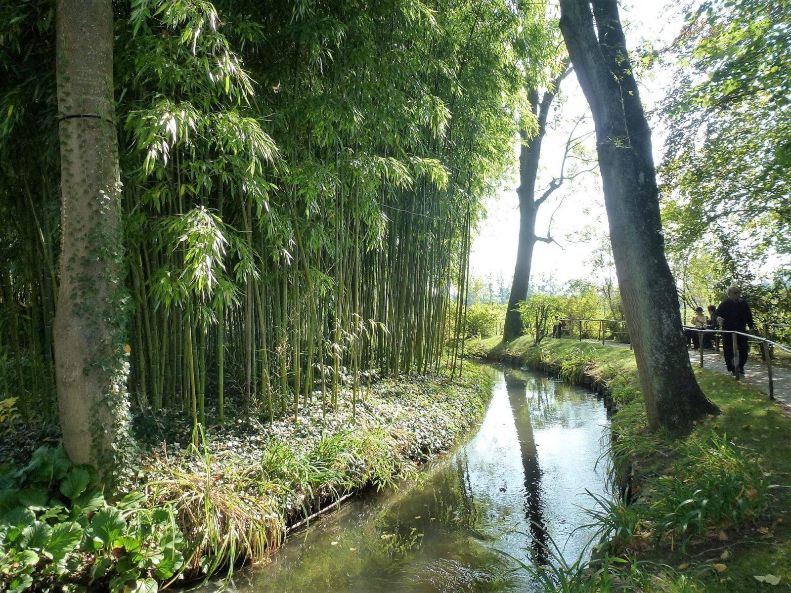 Bambus02