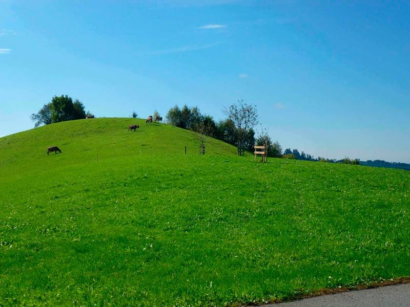 paisaje-bucolico