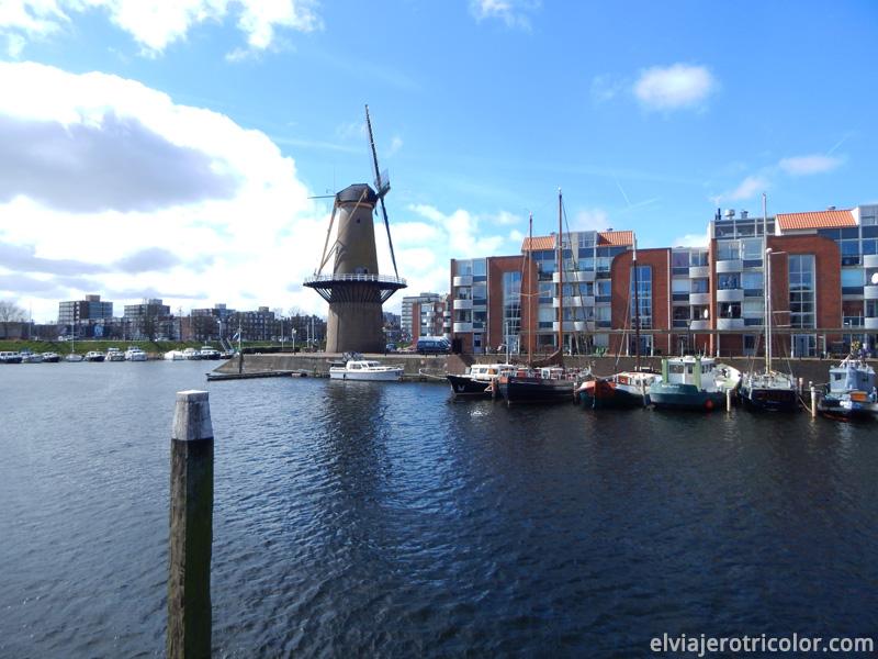 Molino en Rotterdam