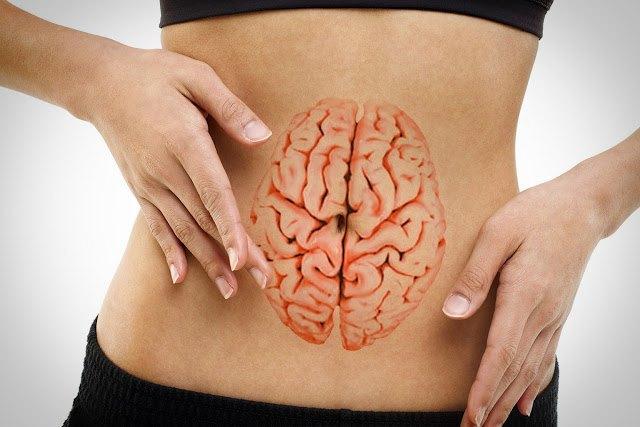 CoronaVinos (II): El cerebro digestivo