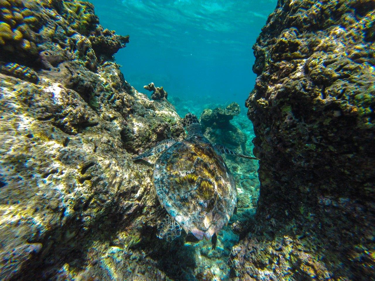 maafushi snorkeling maafushi excursion
