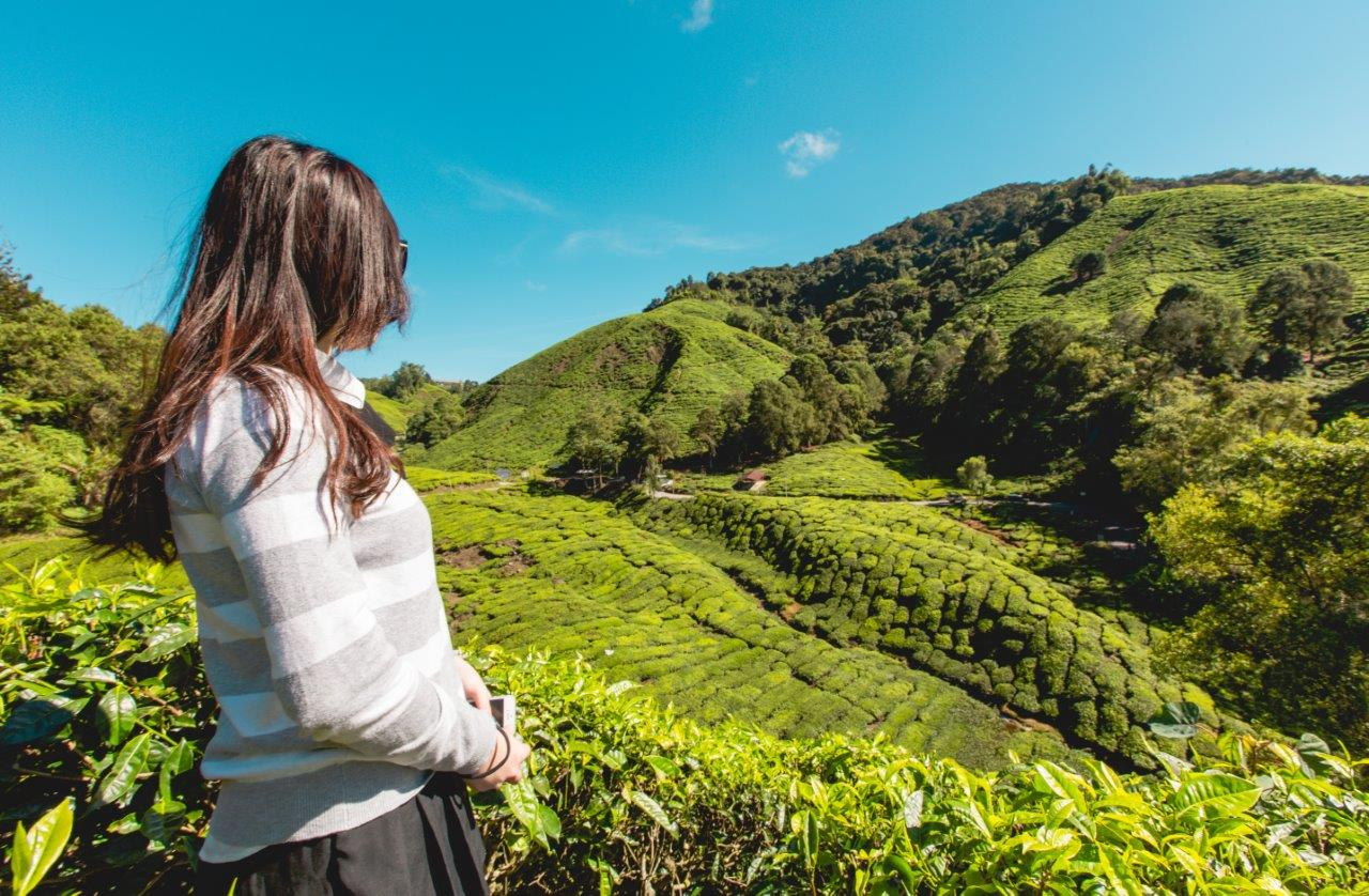 must visit places in cameron highlands