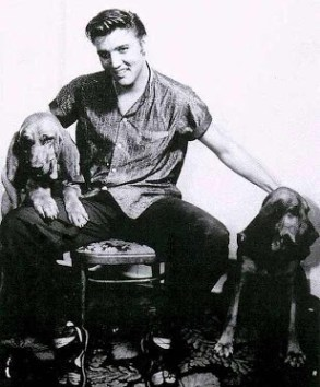 1956 candi Elvis stting with two large bloodhound dogs