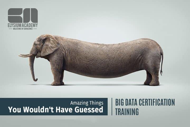 big data certification training
