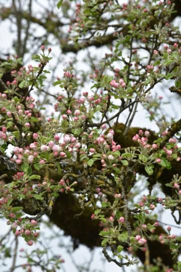 elyziana spring
