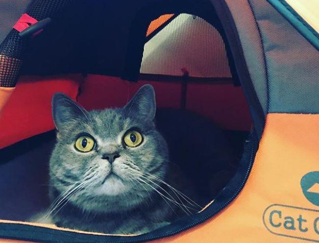 camping para gatos
