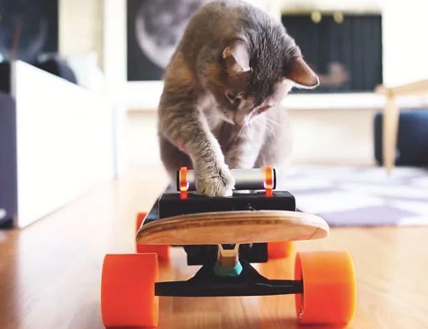 Un diseñador construye un monopatín eléctrico para su gato