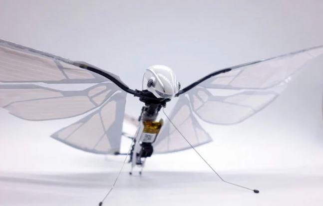 insecto robótico