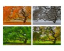 check it out here: https://www.etsy.com/listing/86790050/6x9-print-set-seasons-landscape?ref=favs_view_4