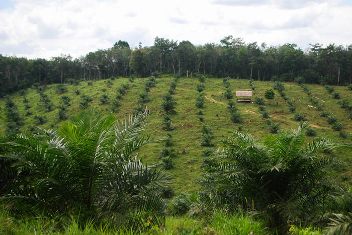 Palm Oil Deforestation. Credit: CIFOR, FlickrCC