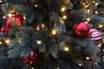 holidays Earthtalk Q&A