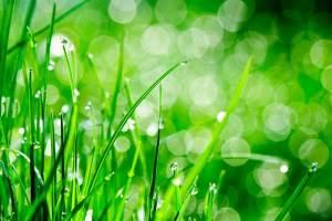 summer lawn care. Credit: Sergiu Bacioiu, FlickrCC