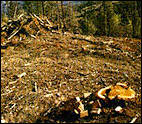 The pristine beauty of the Taylor Ranch in Colorado has been marred (left) by logging. Photo: Ancient Forest Rescue