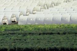 Sustainable Israel