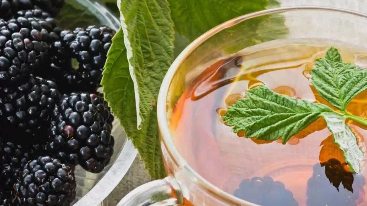 Chá de Folha de Amora Serve Para Baixar Glicose –  Diz Estudo