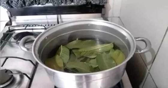 Chá de folhas de goiaba - como fazer