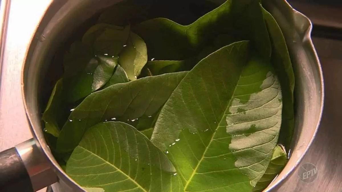 chá de folhas de goiaba