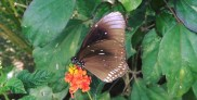 Butterfly & Orchid Park