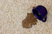 Remove Coffee Stains and Pet Stains from your Carpet