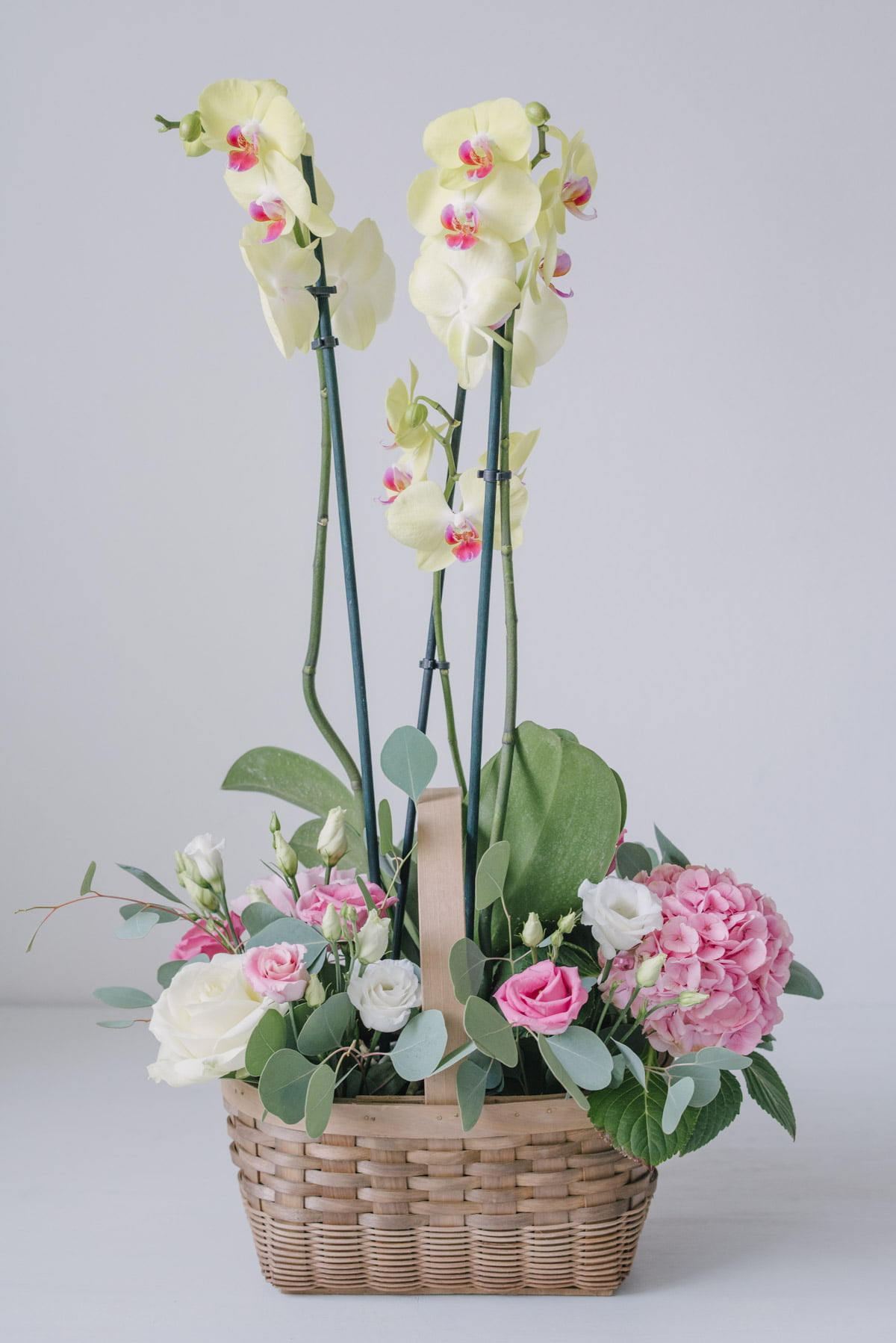 Aranjament Floral In Cos Cu Orhidee La Ghiveci