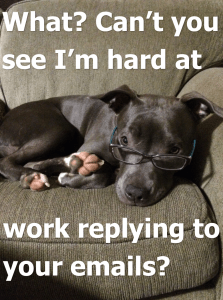 prudence the pitbull replies to emails contact us