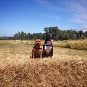Tugboat ellamae pitbull dog training testimonial