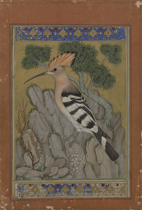 hoopoe bird painting india miniature