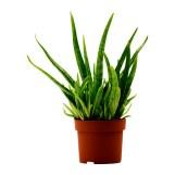 Aloe Planter, $3.99