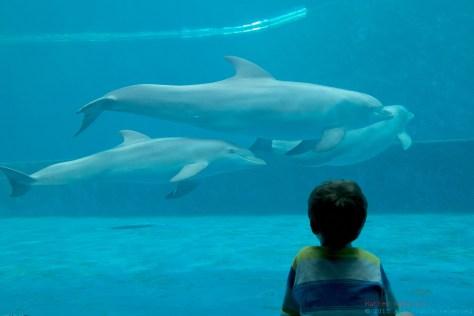 aquário de Génova Itália