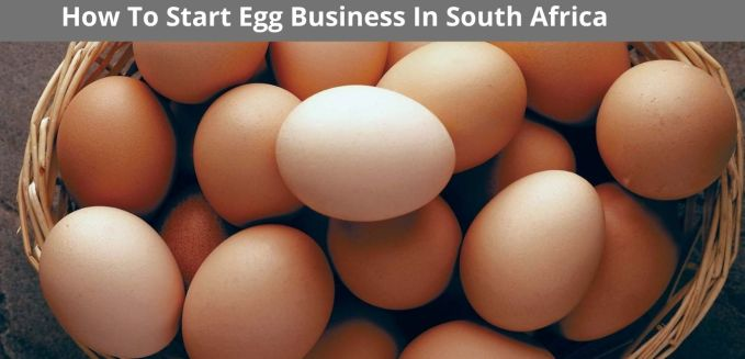 How To Start Egg Business In South Africa