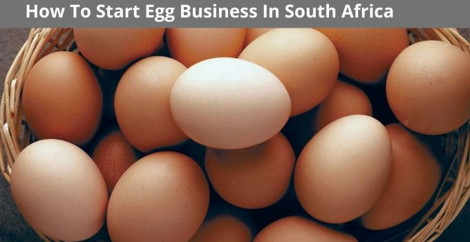 How To Start An Egg Business In South Africa – Simple Business Tips