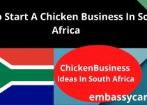 How To Start A Chicken Business In South Africa – Read This Business Tips