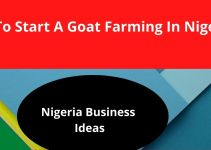 Goat Farming In Nigeria – Learn How To Make Money From Rearing Goats