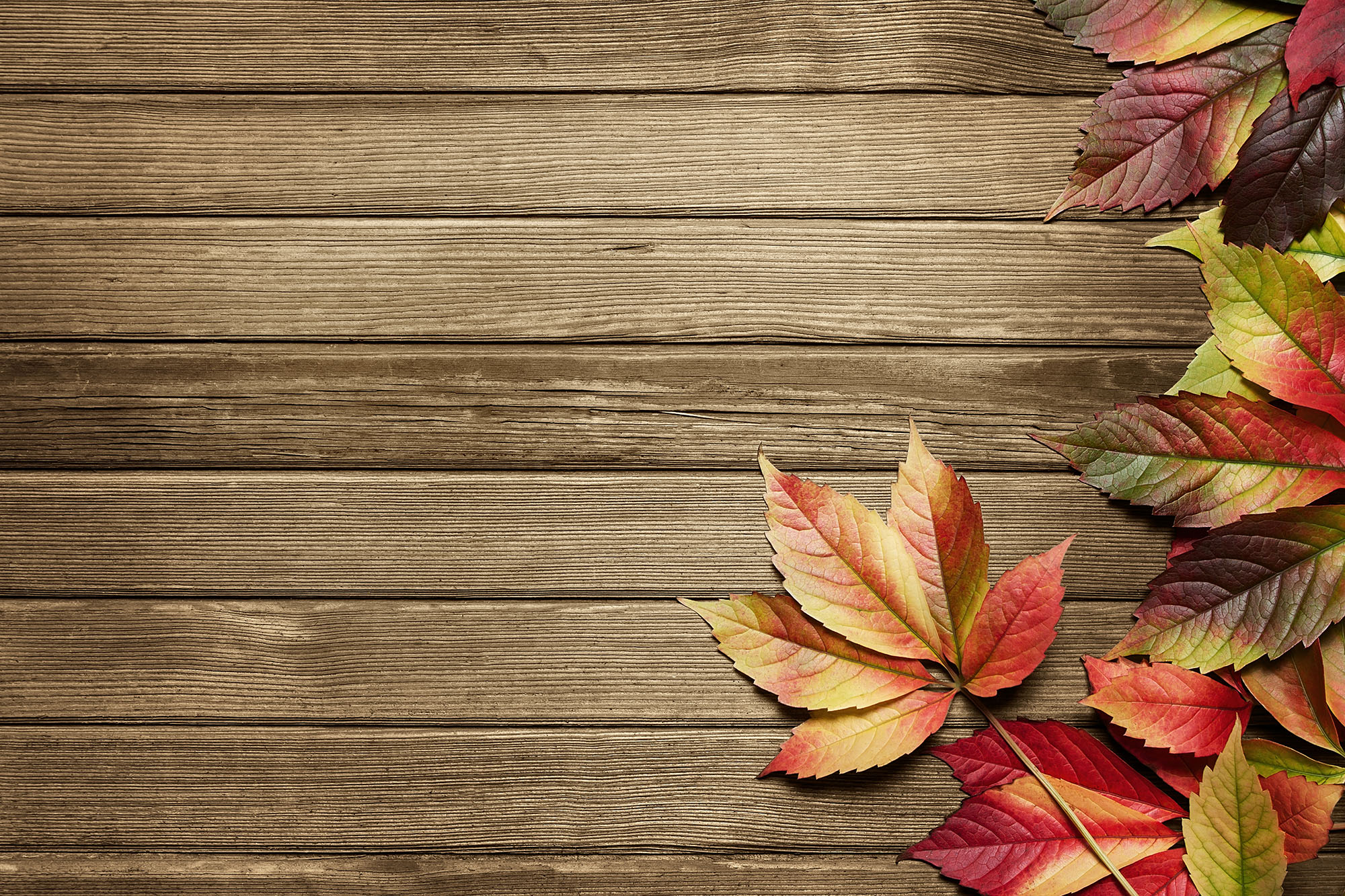 fall leaves powerpoint template