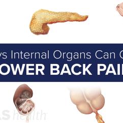 Dog Vital Organs Diagram 1997 Club Car Wiring 36 Volt Slideshow 7 Ways Internal Can Cause Lower Back Pain