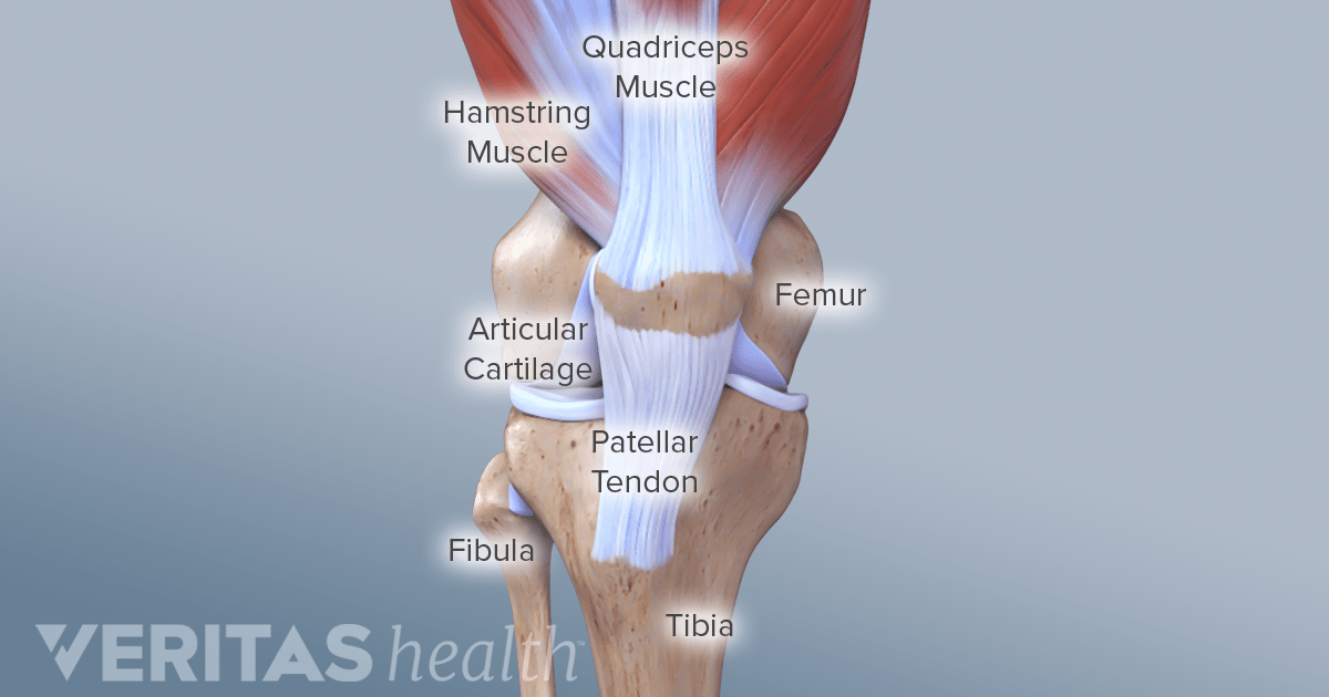 Soft Tissue of the Knee Joint