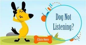 dog not listening