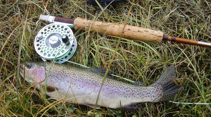 How to Identify & Find Rainbow Trout