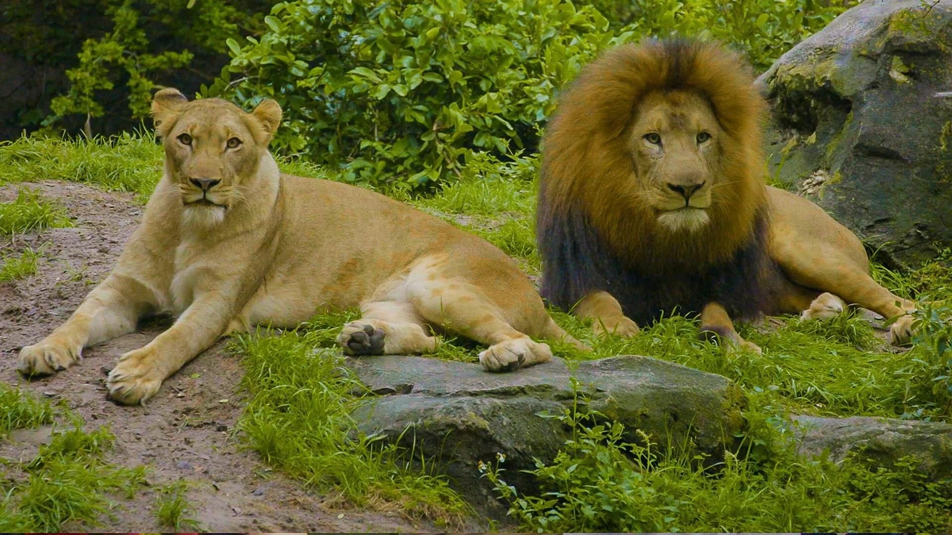medium resolution of Animal Group Behavior Video For Kids   3rd