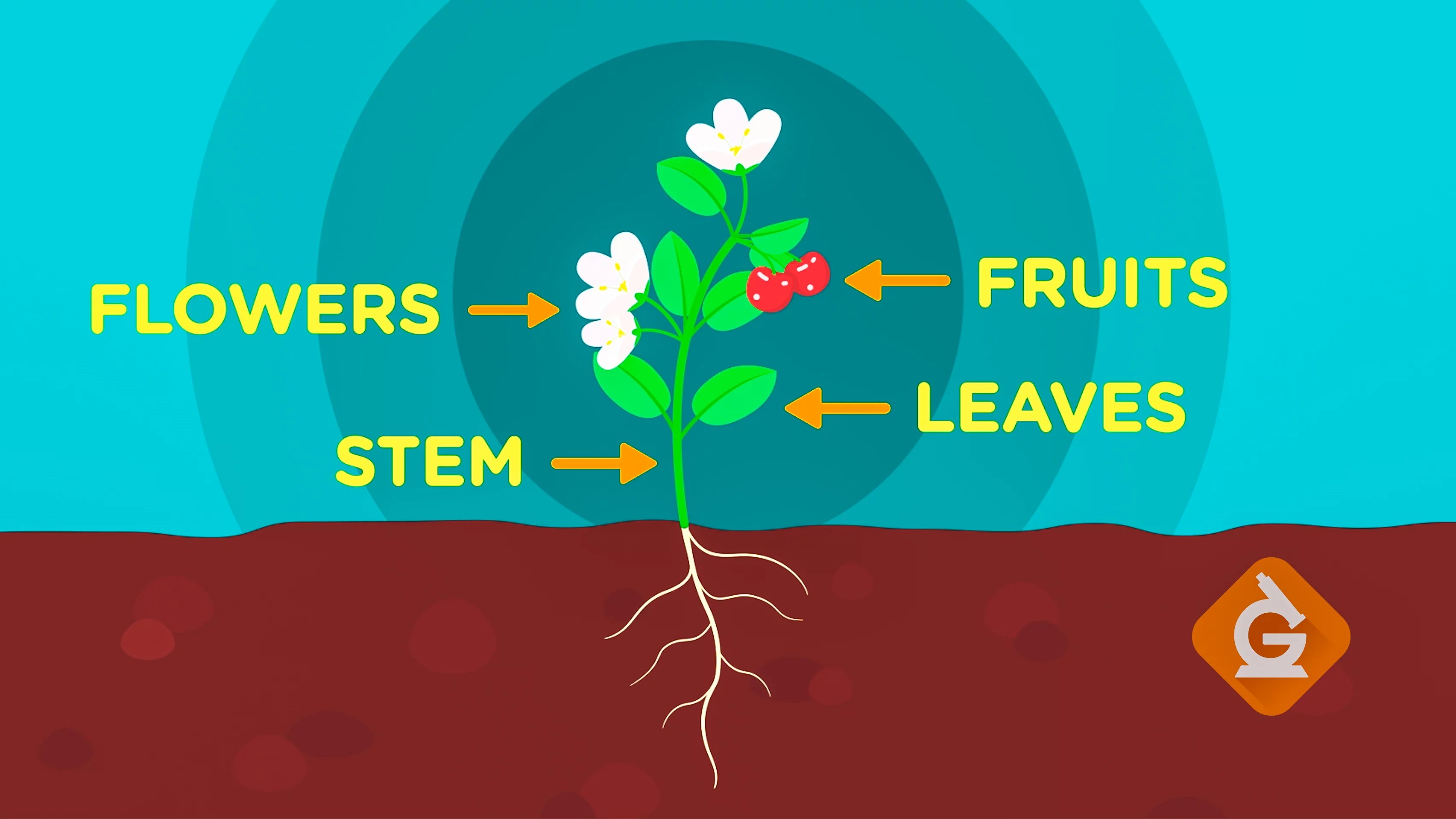 small resolution of What Are the Parts of a Plant?   Science Video For Kids   Grades K-2