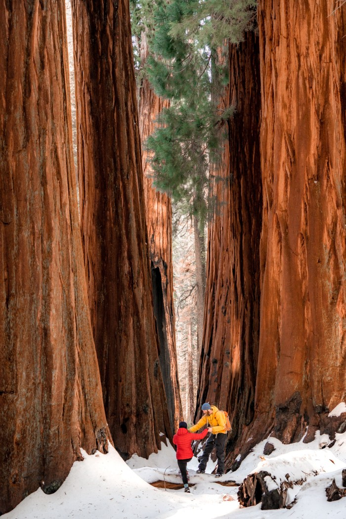 20+ Helpful Things to Know Before Visiting Sequoia National Park in Winter
