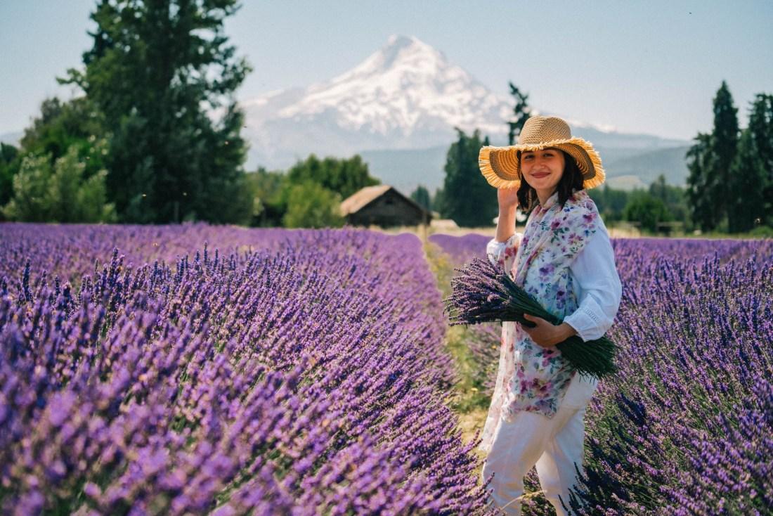 Lavender Valley Oregon Best lavender fields in Oregon