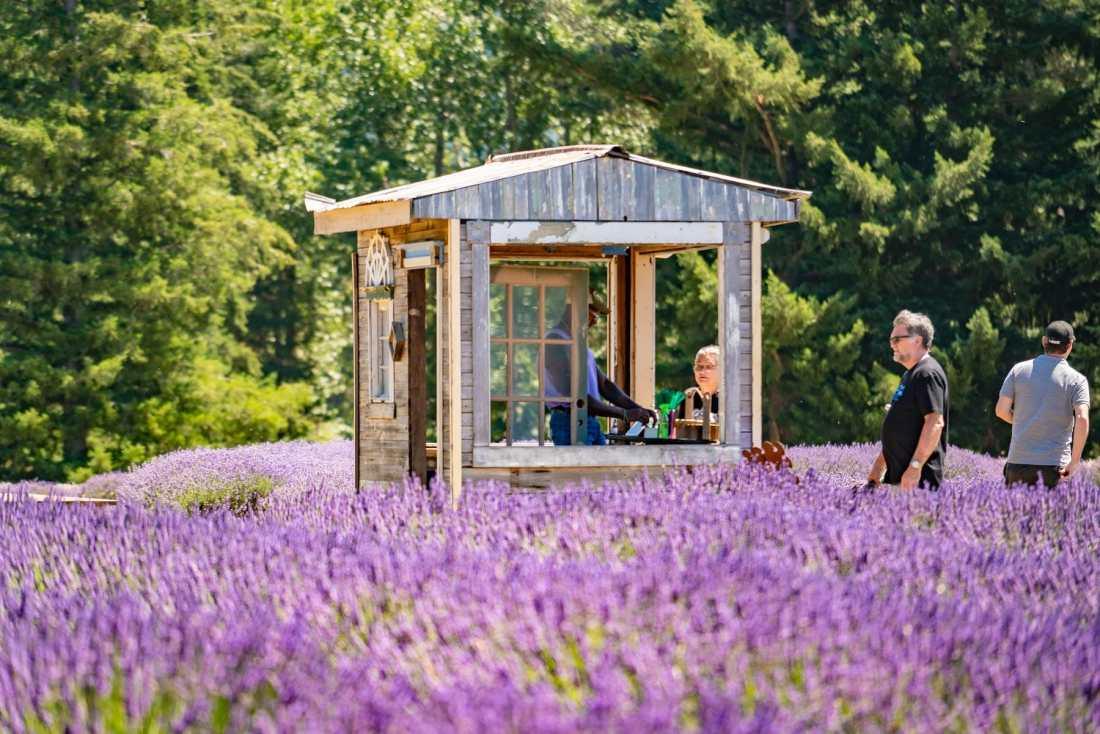 farm stand at lavender farm