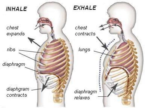 diaphragmaticbreathing-presence-breath-meditation