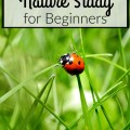 Tips for nature study for beginners. How-to for homeschoolers. embracingdestinyblog.com