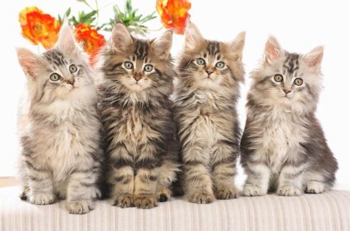 30192_1600x1200-4-cute-cats