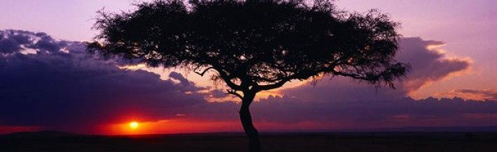 africa-tree