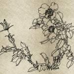 Redwork Sakura Butterfly Embroidery Design 4 Sizes 8 Formats Embrostitch